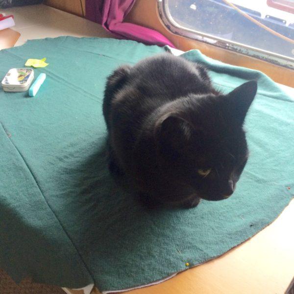 Nishi on the cape wool